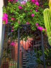 Iron gate and Bouganvilla in Todos Santos Baja California Sur 1