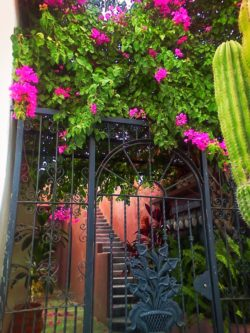 Iron gate and Bouganvilla in Todos Santos Baja California Sur 1