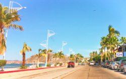 Palm Trees on the Malecon La Paz Baja California Sur 1