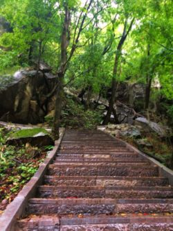 Staircase in the woods at Taibai Mountain National Park 1