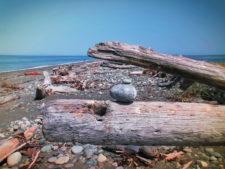 Driftwood at Dungeness National Wildlife Refuge Sequim WA 3