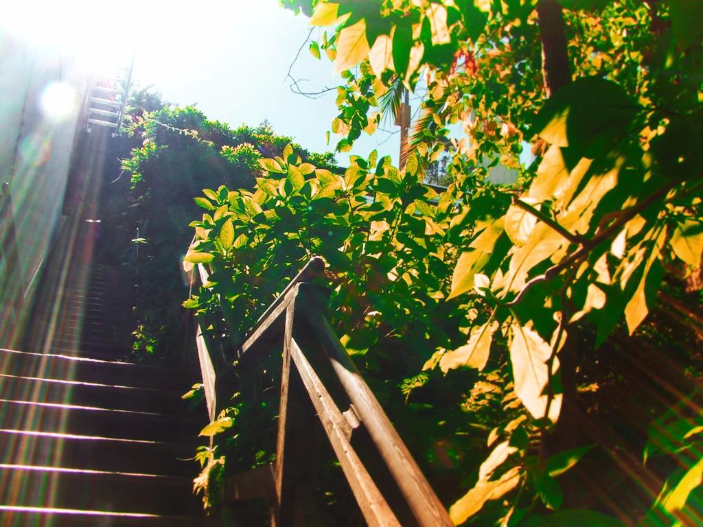 Greenwich-Stairs-on-Telegraph-HIll-San-Francisco-1.jpg