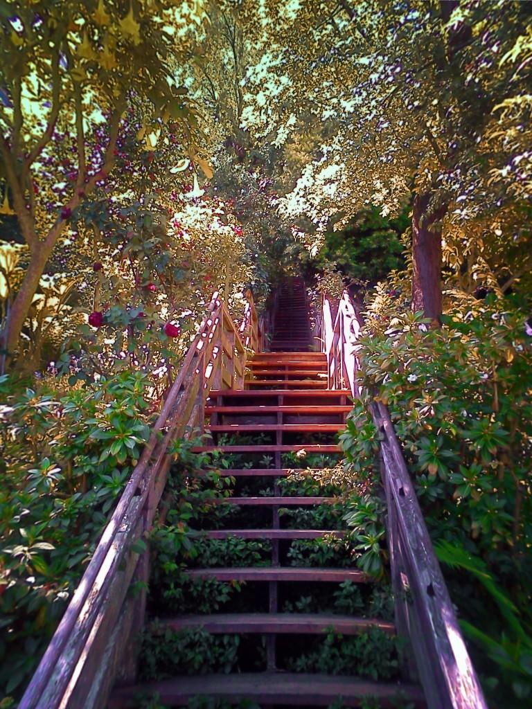 Greenwich Walk Telegraph Hill San Francisco 1