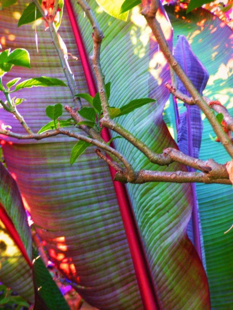 Tropical Garden leaves Telegraph Hill San Francisco 1