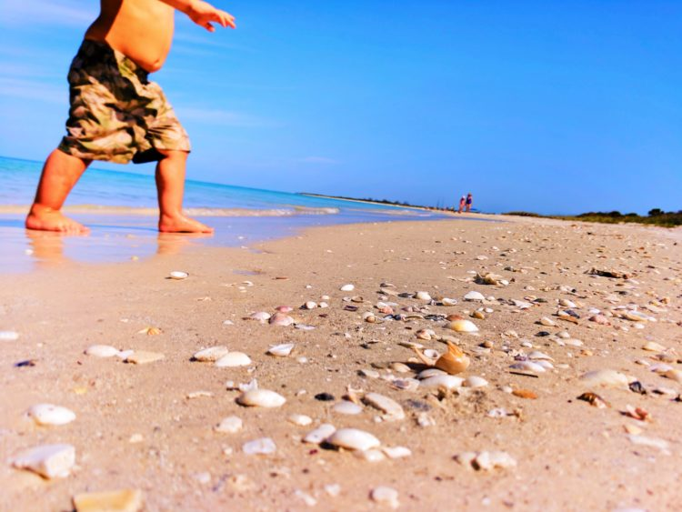 Beach at Fort De Soto Park Pinellas County Florida 7