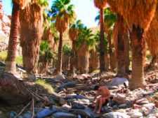 Chris Taylor hiking at Indian Canyons at Agua Caliente Palm Springs 9