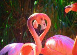 Flamingos in Everglades National Park 1