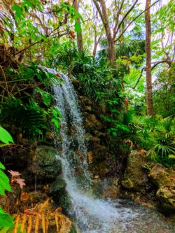 Lush Waterfall Garden at Rainbow Springs State Park 4