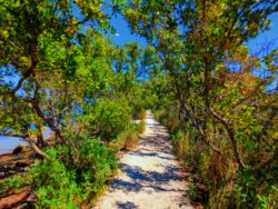 Nature Trail at Biscayne National Park 2