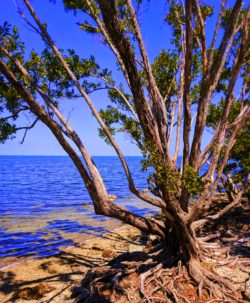 Nature Trail at Biscayne National Park 3