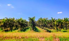 Palm Tree Farm at Biscayne National Park 1