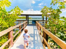 Taylor Family Matanzas Pass Preserve Fort Myers Beach Florida 3b