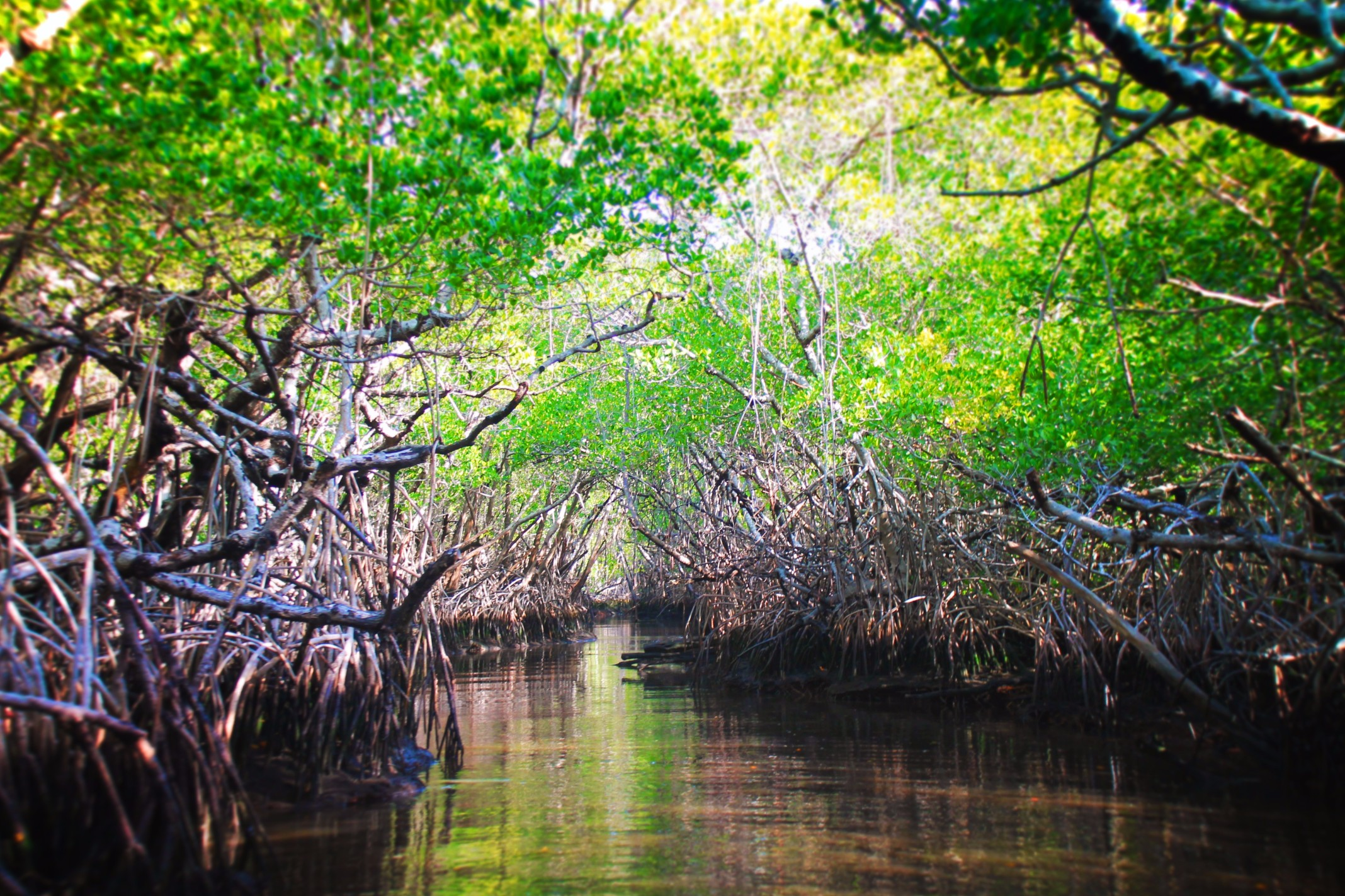 Traveling through Mangroves Airboat Ride Everglades City Florida 2