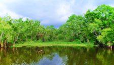 Cypress-Trees-and-marsh-on-Ecotour-at-De-Leon-Springs-State-Park-Daytona-Beach-3-e1495776292994-225x128.jpg