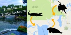 Fountain of Youth Ecotours in Florida De Leon Springs Map