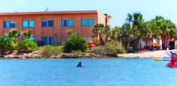 Dolphins in Matanzas River kayaking Ripple Effect Ecotours St Augustine 2