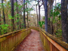 Kirby Storter Big Cypress National Preserve from Flickr cc Florida Hikes 2