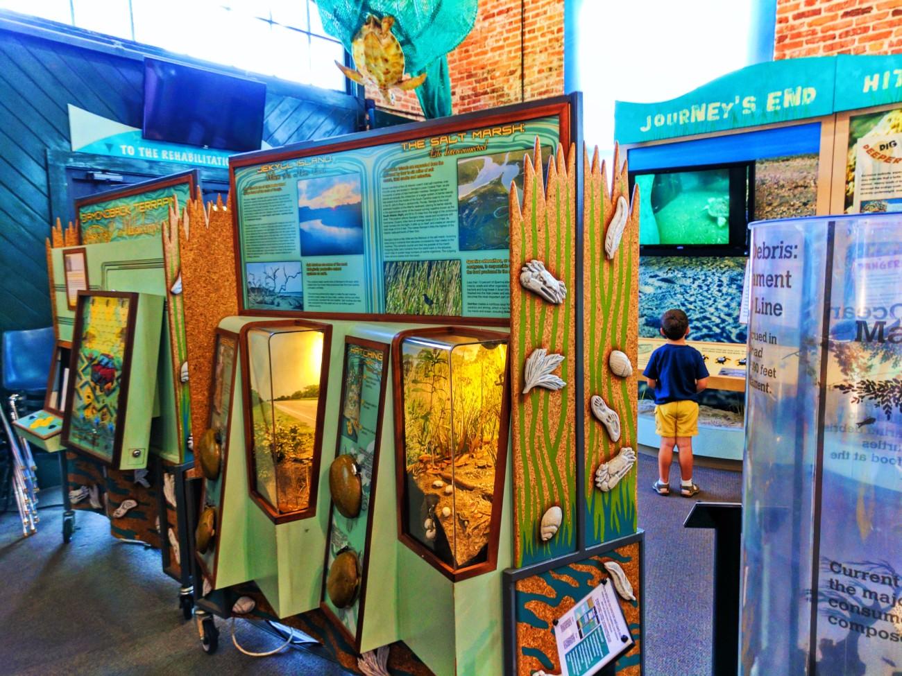 Lifecycle exhibit at Georgia Sea Turtle Center Jekyll Island Golden Isles Georgia 1