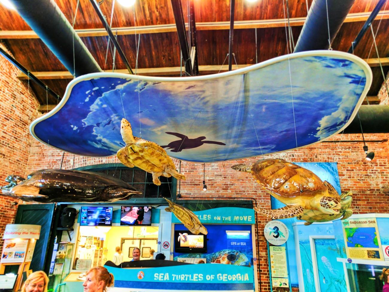 Lifecycle exhibit at Georgia Sea Turtle Center Jekyll Island Golden Isles Georgia 2