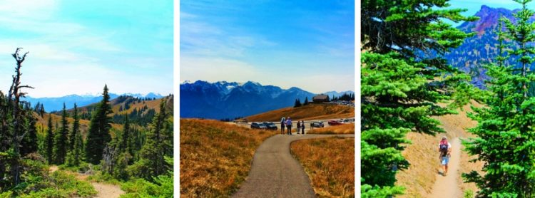 Hiking Hurricane Ridge in Olympic National Park is a unique experience with breathtaking views across the Olympic Mountains and north to Victoria BC. Beautiful! Trail recommendations and planning for a visit to Hurricane Ridge.