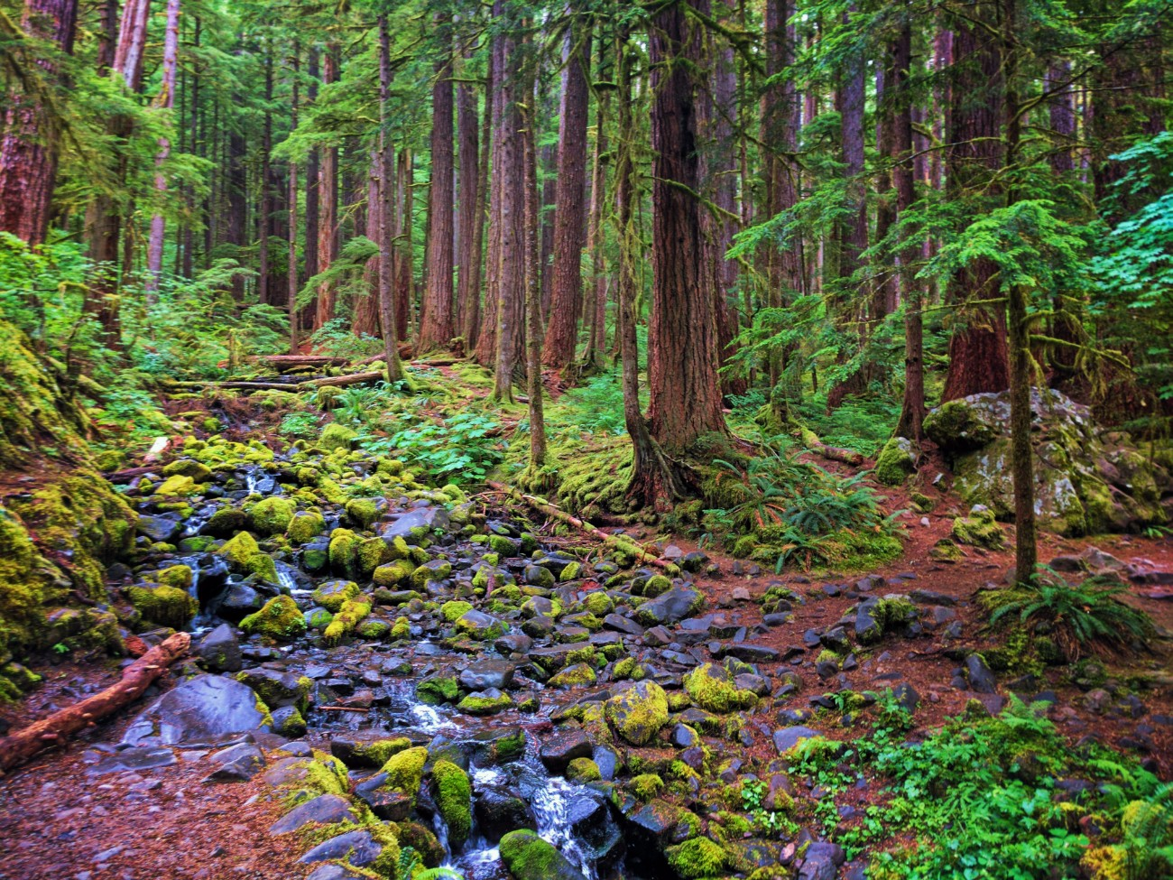 Mossy creek in Rainforest Sol Duc Olympic National Park 1