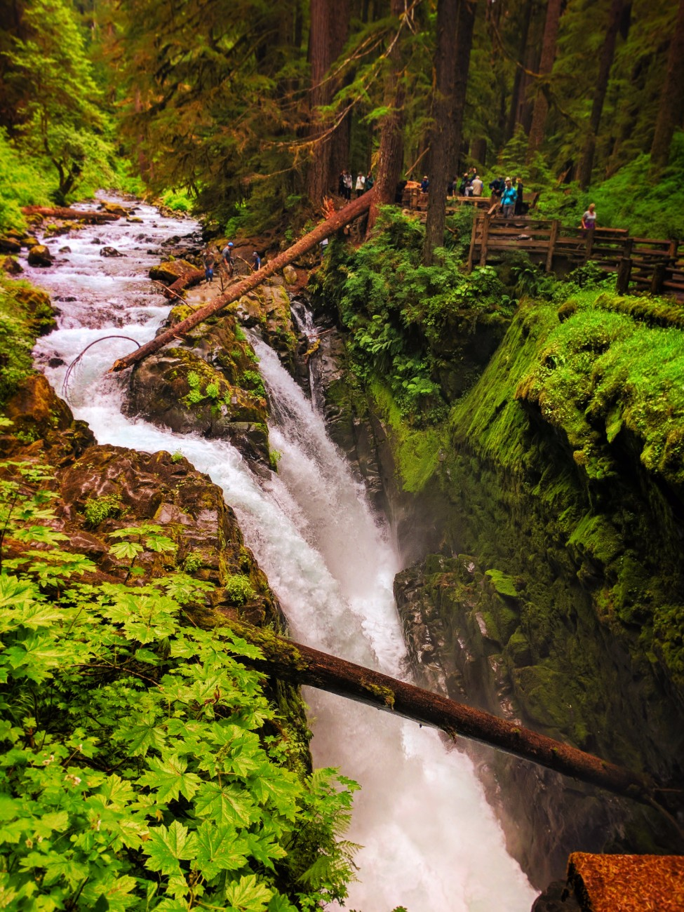 Mossy gorge and waterfalls in Rainforest Sol Duc Falls Olympic National Park 2