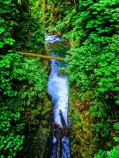 Mossy gorge and waterfalls in Rainforest Sol Duc Falls Olympic National Park 5