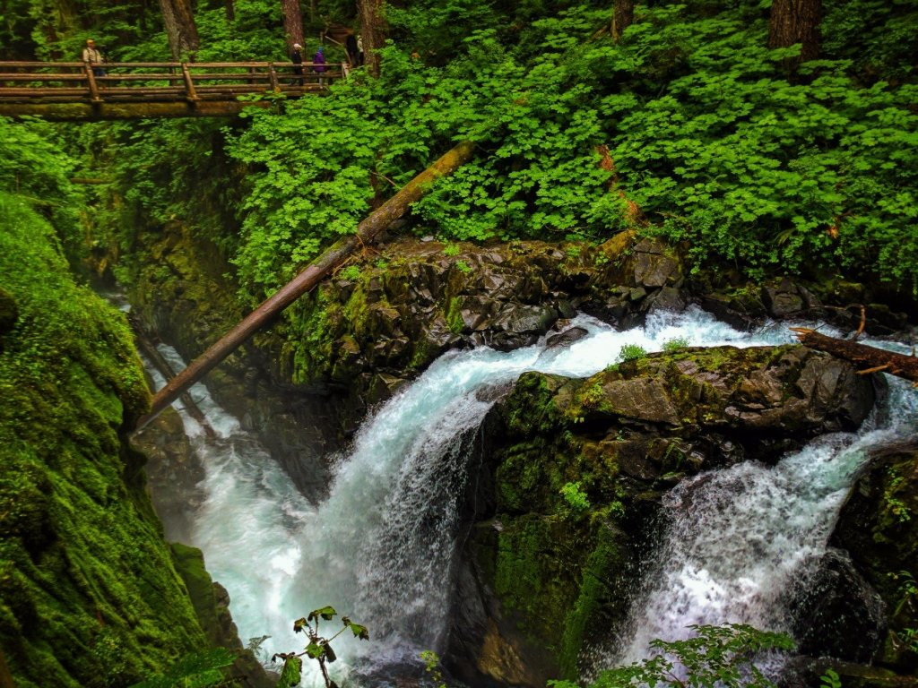 Mossy gorge and waterfalls in Rainforest Sol Duc Falls Olympic National Park 9