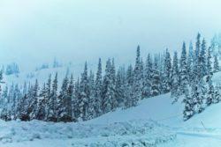 Snowy trees at Hurricane Ridge Olympic National Park 2