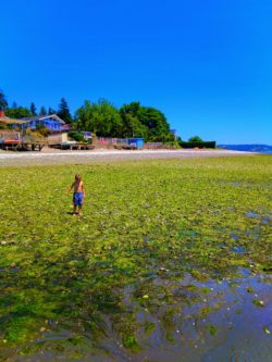 Taylor Family at Beach low tide in Suquamish 1