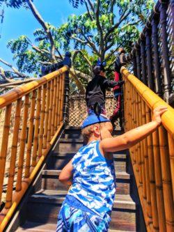 Taylor Family climbing Tarzans Treehouse Adventureland Disneyland 1