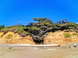 Hanging tree cave at Kalaloch Olympic National Park 6