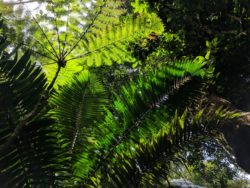 Fronds Vegetation in El Yunque National Forest Puerto Rico