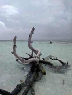 Snorkeling trip at Isla Palomina Puerto Rico 4