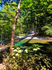 Suspension-Bridge-in-Grove-of-the-Patriarchs-Mt-Rainier-National-Park-2-169x225.jpg