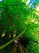 Taylor Family hiking Grove of the Patriarchs Mt Rainier National Park 3