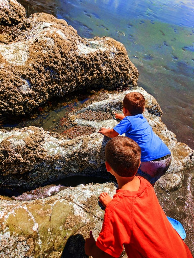 Taylor family with Sea Anemones in tidepools at Ruby Beach Olympic National Park 3