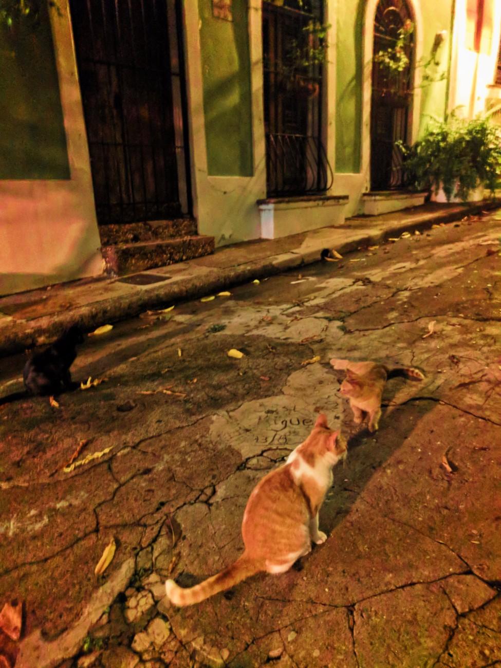 Cats on Callejon Hospital in Old San Juan Puerto Rico at night 2