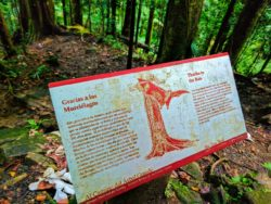 Informational sign in El Yunque National Forest Puerto Rico 3