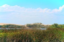 Sand Dunes at Oso Flaco Lake Nature Preserve Nipomo California 1