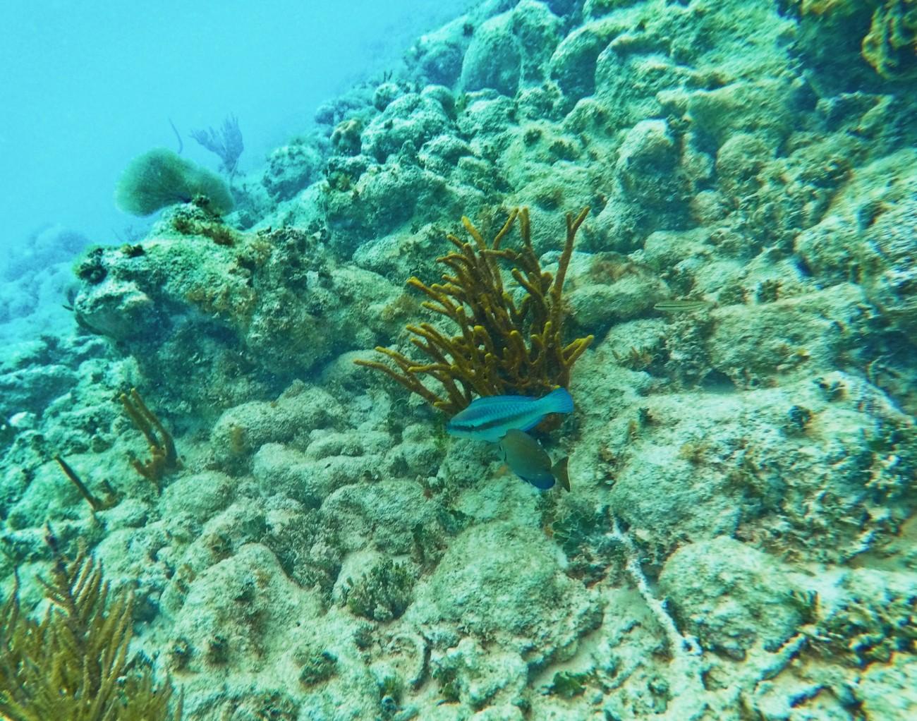 Tropical fish snorkeling Isla Palominito Puerto Rico 1