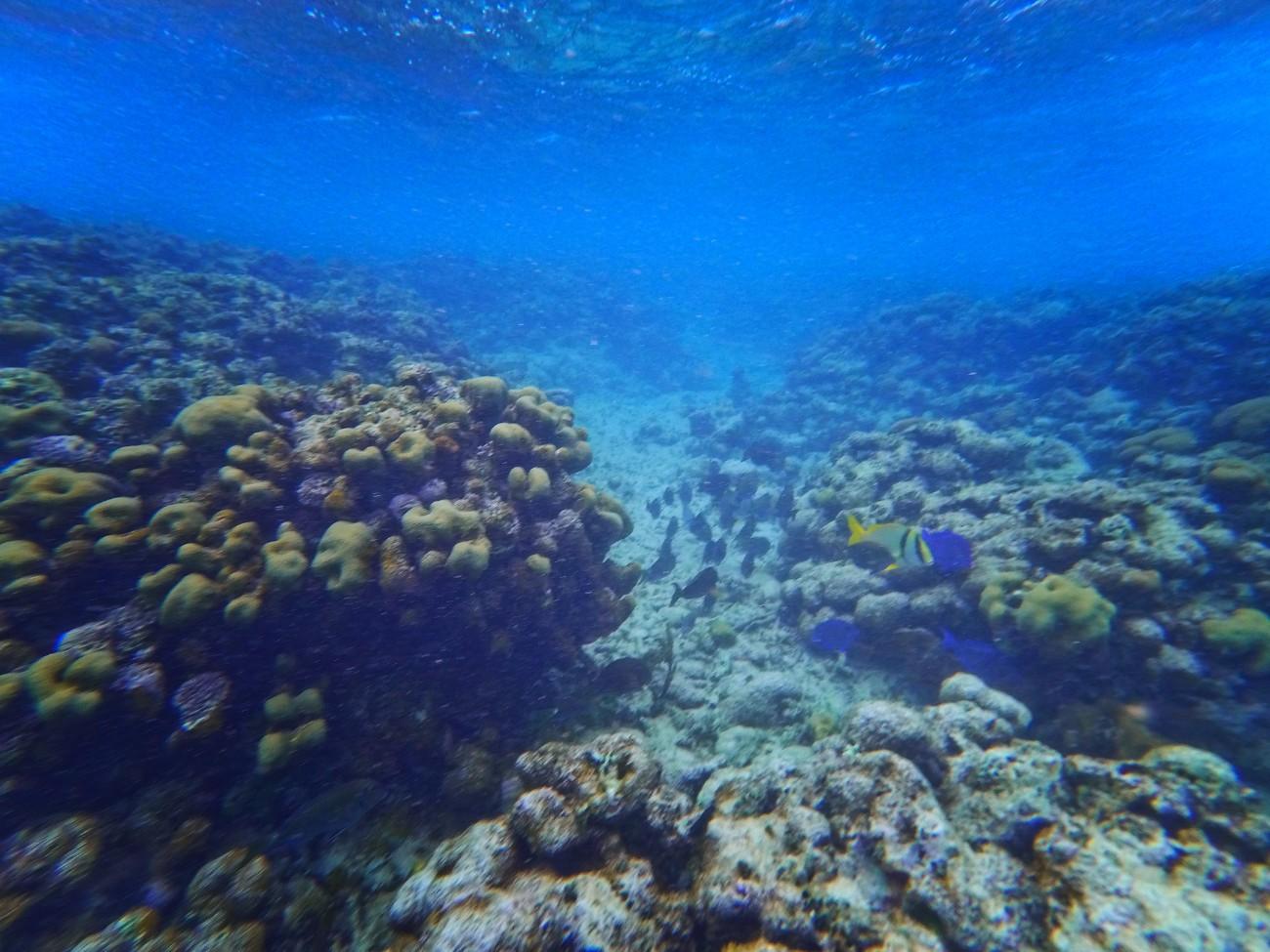 Tropical-fish-snorkeling-Isla-Palominito-Puerto-Rico-2.jpg
