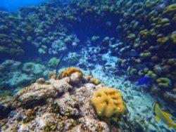 Tropical fish snorkeling Isla Palominito Puerto Rico 3