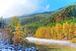 Fall colors and snow on Flathead River Flathead National Forest Montana 8