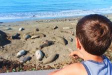 Taylor Family at Elephant Seal Colony Hearst San Simeon California State Park 8