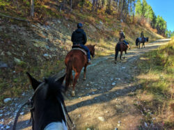 Taylor Family horseback riding at Bar W Guest Ranch Whitefish Glacier County 15