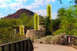 Chihuly Blown Glass at Desert Botanical Garden Phoenix Tempe 1