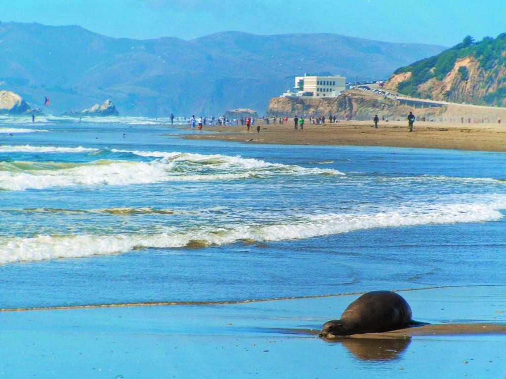 Sea-Lion-at-Ocean-Beach-San-Francisco-1.jpg