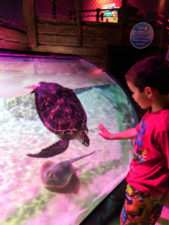 Taylor Family and sea turtle at SEA LIFE Arizona Tempe 1