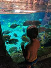 Taylor Family at Rainbow Reef at Disney Aulani Oahu 3